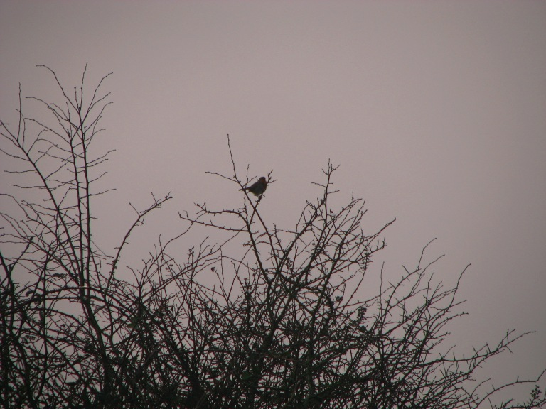 """""""..and evening full of the linnet's wings.."""""""