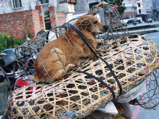 To Stroke Or To Stir-Fry  - Dog For Food Breeding in China