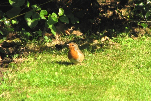 autumn-is-here-and-winter-is-approaching-so-says-robin-red-breast