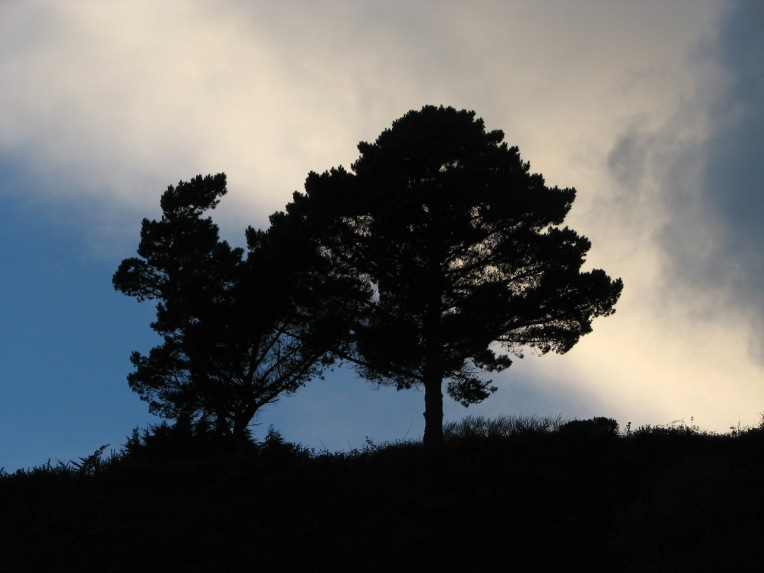 """Winter dusk trees"" Killiney Beach, County Dublin, Ireland"