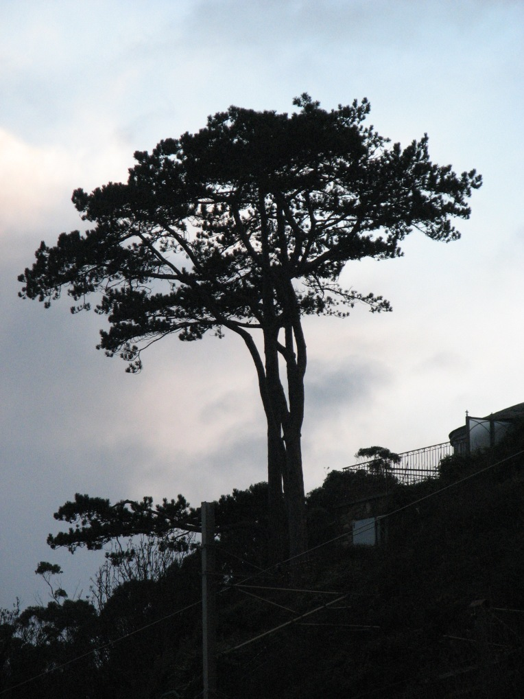 """""""Winter dusk tree"""" Killiney Beach, County Dublin, Ireland"""