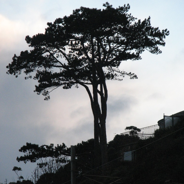 """Winter dusk tree"" Killiney Beach, County Dublin, Ireland"