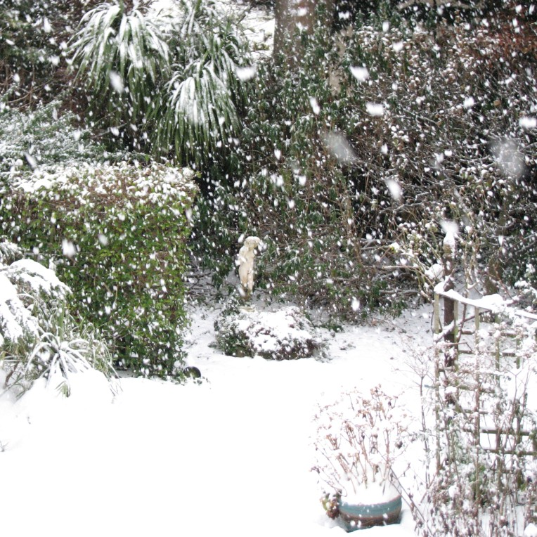 """Flurry of Snowflakes"" Moorefield, County Dublin, Ireland"