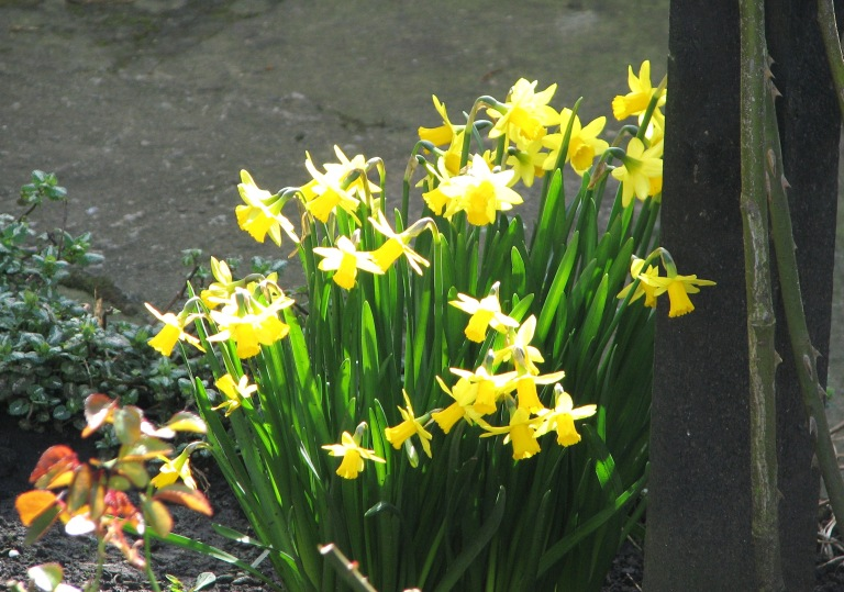 Daffodils William Wordsworth 2