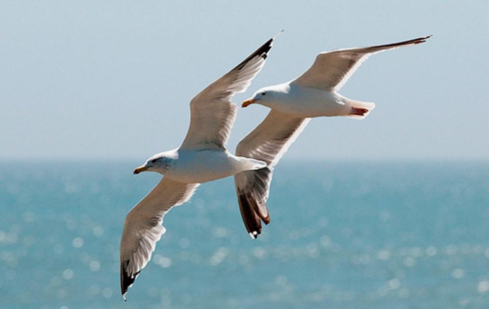 The White Birds William Butler Yeats